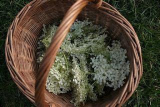 fiori tutto l anno fiori tutto l anno paperblog