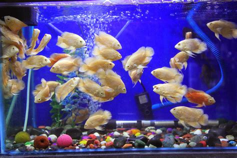 benefits of aquarium fish tanks decoration fish tank best aquarium best aquarium benefits of aquarium fish tank