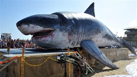 imagenes reales megalodon el tibur 243 n blanco y la leyenda del megalodon