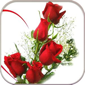 google images rose hd rose flowers live wallpaper android apps on google play