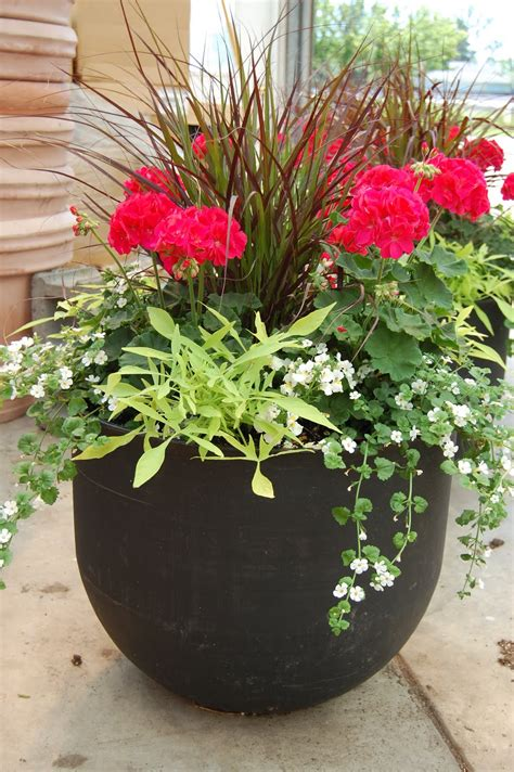 Best Plants For Patios by Schaefer Greenhouses How To Plant A Patio Pot Container