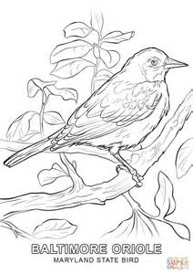 click the maryland state bird coloring coloring page of