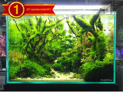 aquascape contest act aquascape contest 2017