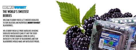 blackberry eating theme the health benefits of blackberries benefits of eating