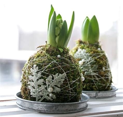 light bulbs that look like water wrapped in moss and wire hyacinth bulbs look like