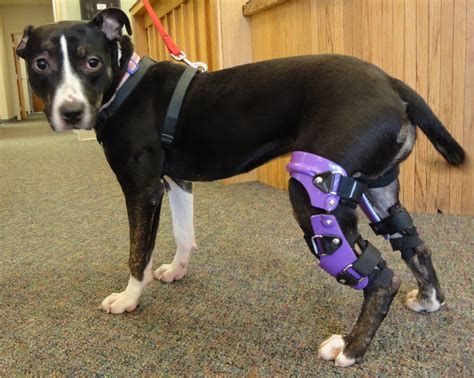 acl brace my pet s brace leg braces and prosthetics for pets plus general information