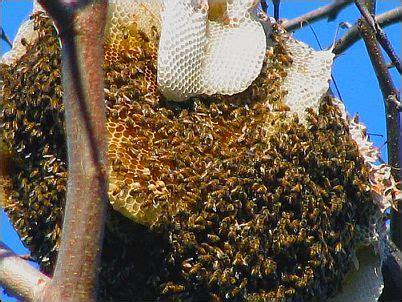 Termometer Berapa miracle honeybee satpam cleaning service n arsitek