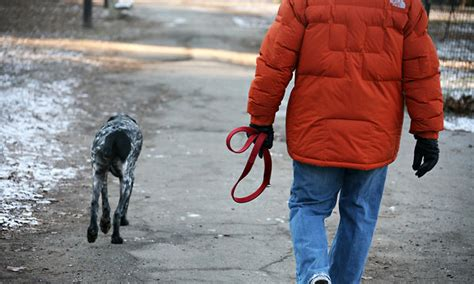 how to leash your puppy how to learn your to walk leash all about and for dogs