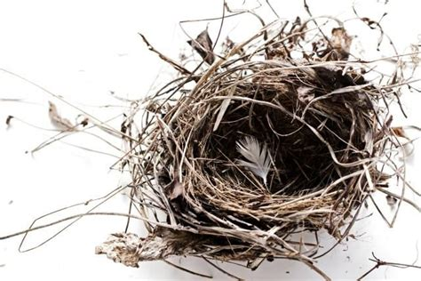 redecorating ideas for your empty nest 1000 ideas about empty nest syndrome on pinterest empty