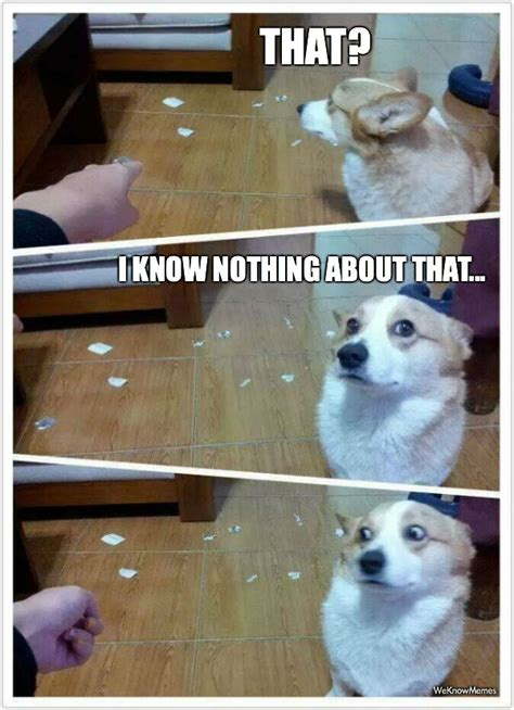 guilty puppy guilty is guilty meme weknowmemes