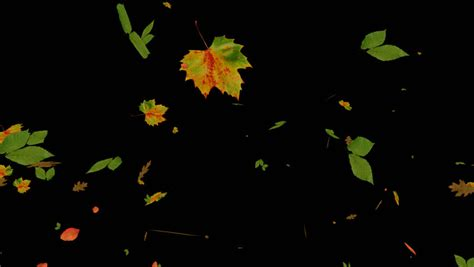 leaf pattern overlay loop alpha channel leaf falling in forest overlay for