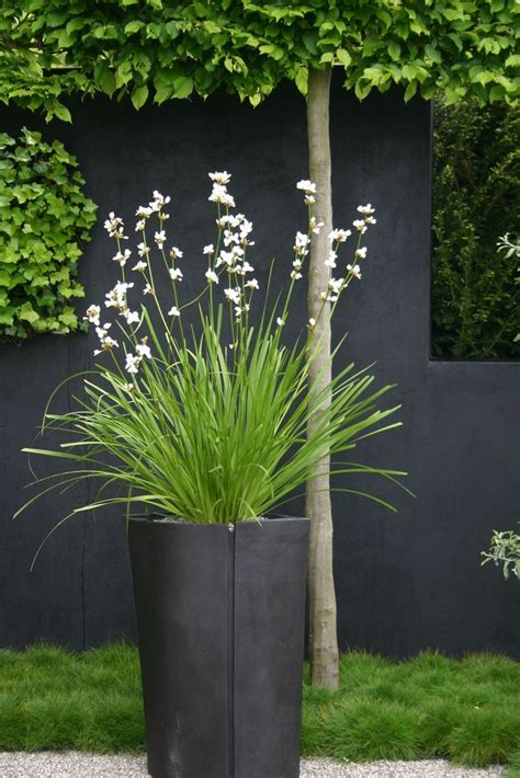 Bambus Store 1356 by Best 25 Black Planters Ideas On