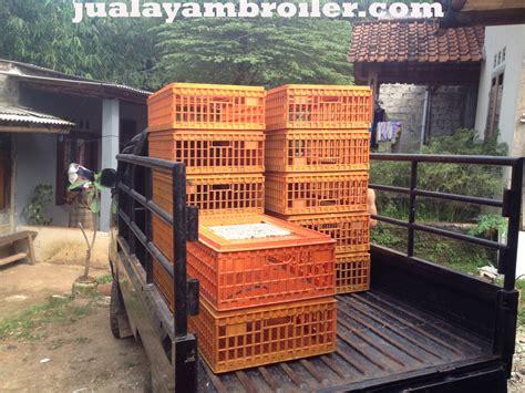 Jual Bibit Ayam Broiler Tangerang jual ayam broiler di pondok cabe tangerang selatanjual ayam broiler jual ayam broiler