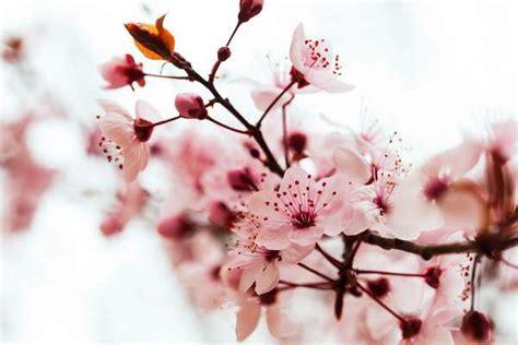 fiori di primavera da giardino 10 piante fioriscono in primavera greenme