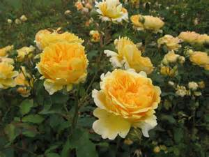 Botanical Gardens Flowers Flowers In The Royal Botanical Gardens At Kew The Globe Trotter