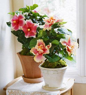 easy to take care of indoor plants 25 best ideas about easy house plants on pinterest
