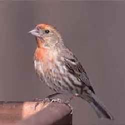 bird descriptions