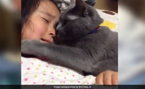 how to comfort a cat cat trying to comfort a crying girl is the sweetest thing