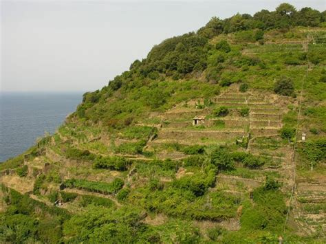 terrazzamenti liguri galleria fotografica dei paesaggi terrazzati progetto alpter