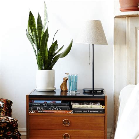 the best indoor plants for small spaces tiny living the best indoor plants from the sill well good