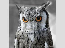 Black And White Owl Royalty Free Stock Image - Image: 3192676 Pumpkin Pattern Free
