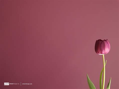 wallpaper tulips free tulip wallpapers wallpaper cave