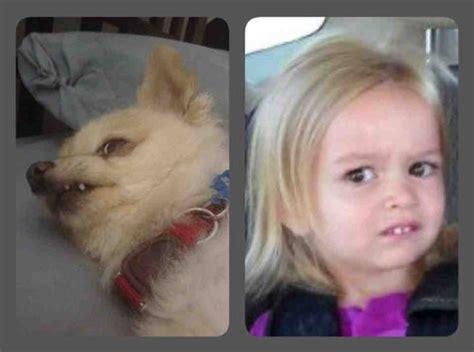 Little Girl Meme Teeth - ドキドキするほどそっくり 偶然にしては似すぎている写真いろいろ らばq