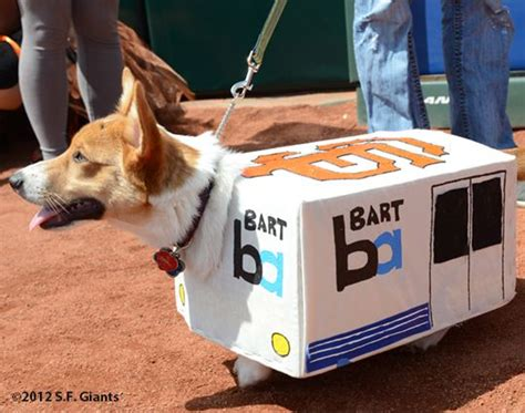 corgi puppies bay area corgi dressed as bart corgi time parks cars and names