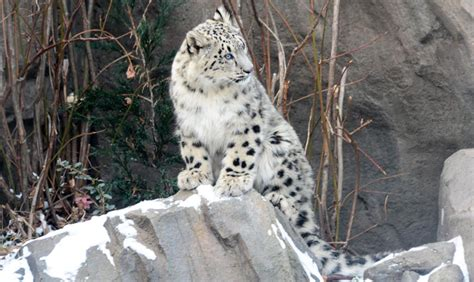 Cute Zoo Animals to See this Winter : NYC Parks