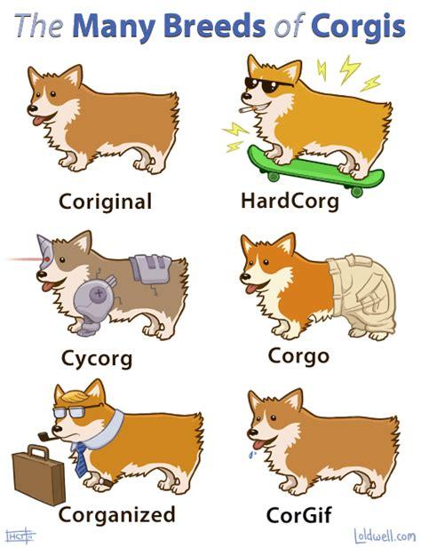 how many corgis does the the many breeds of corgis