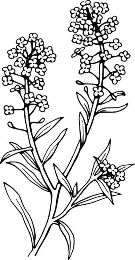 Pohon Bunga Aster Purple Aster alyssum clip at clker vector clip