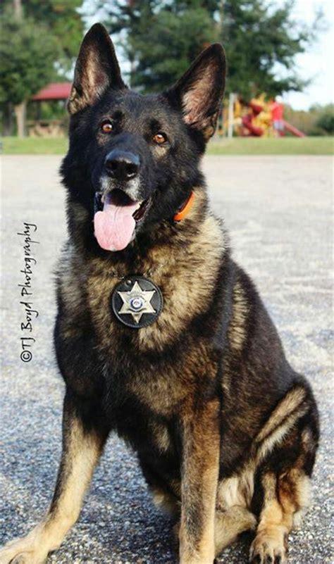 k9 german shepherd puppies k9 german shepherd our k 9 service heroes