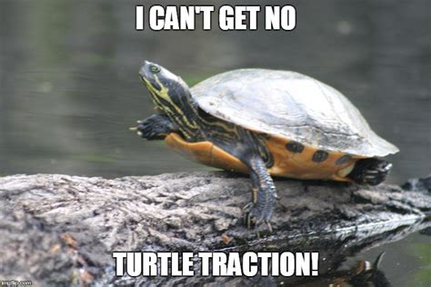 turtle memes thatll   day