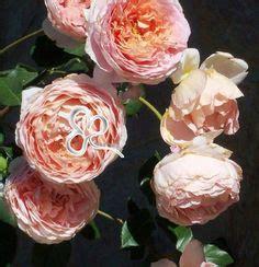 gardenia significato fiore 1000 images about significato e storia dei fiori on