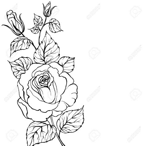 outline of a rose tattoo blossom pencil and in color