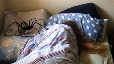 spider in bed giant spider sneaks into her bedroom youtube