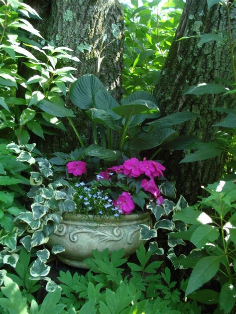shade garden with hostas and impatiens and ivy in container garden pinterest shade