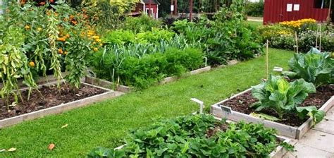 Plant Rotation In Vegetable Garden Crop Rotation Planting Plant Succession By Rotating