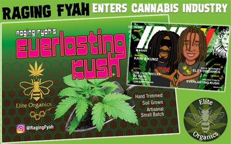 Entering Jamaica With A Criminal Record Raging Fyah Jamaica S Band To Enter Multi Billion Cannabis Industry With Own