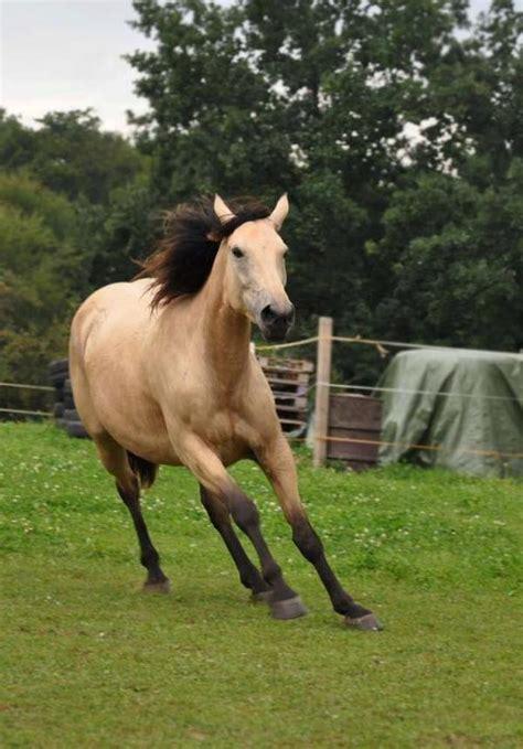 verkaufen kaufen image gallery pferde kaufen