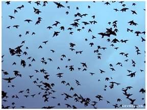 flock of birds by kevrekidis on deviantart