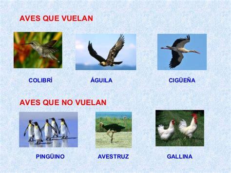 imagenes animales que vuelan animales