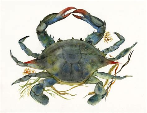 Crab Decor by Crab Watercolor Crab House Decor Blue Crab