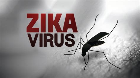 imagenes graciosas zika mosquito repellents tested against zika virus