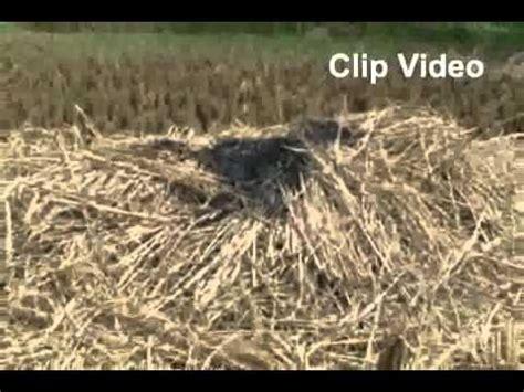 Alat Pemotong Rumput Pakan Sapi alat pencacah serbaguna doovi