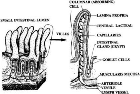sketch book lumen anatomical and physiological considerations of the
