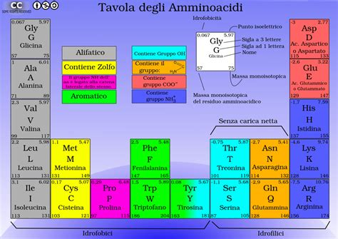 tavola periodica degli alimenti tavola periodica degli aminoacidi 171 bioinfo