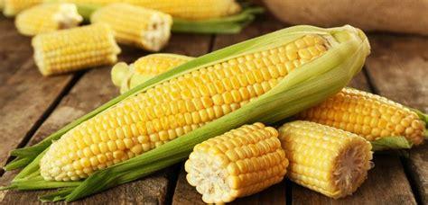 manfaat jagung rebus  diet dijamin bikin cepet