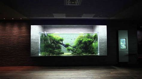 japanese aquascape aquascape in giant aquarium by takashi amano ada japan youtube