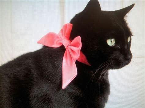 Cat Black Pink blackcatsrule black cats